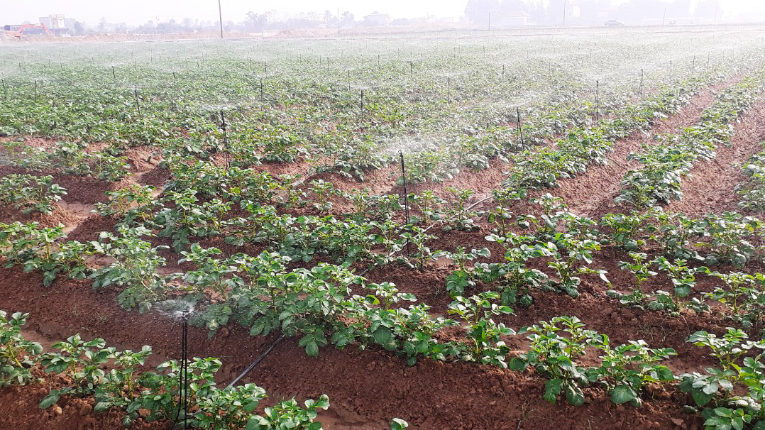 Consulting, supplying modern irrigation techniques and agrochemical equipment